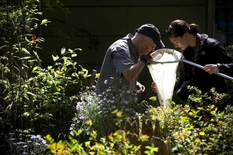 Two people standing in a garden looking into an insect net.