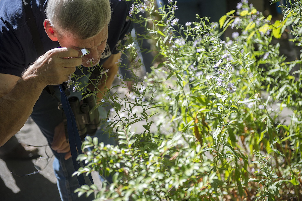 Person looks at plant with hand lense.
