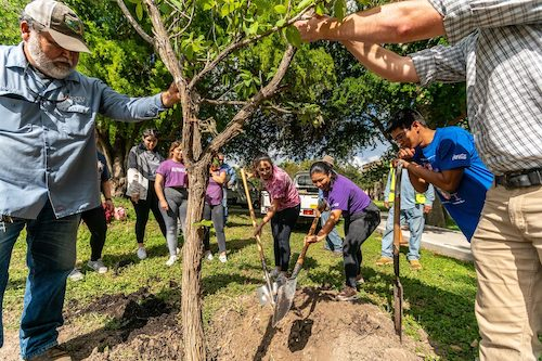 Students at a university work together to plant a tree.