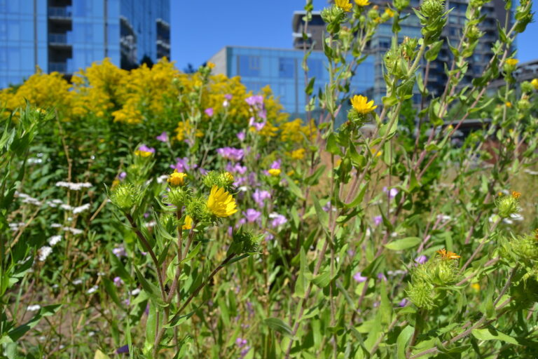 Close up picture of flowers with high rise buildings in the background.
