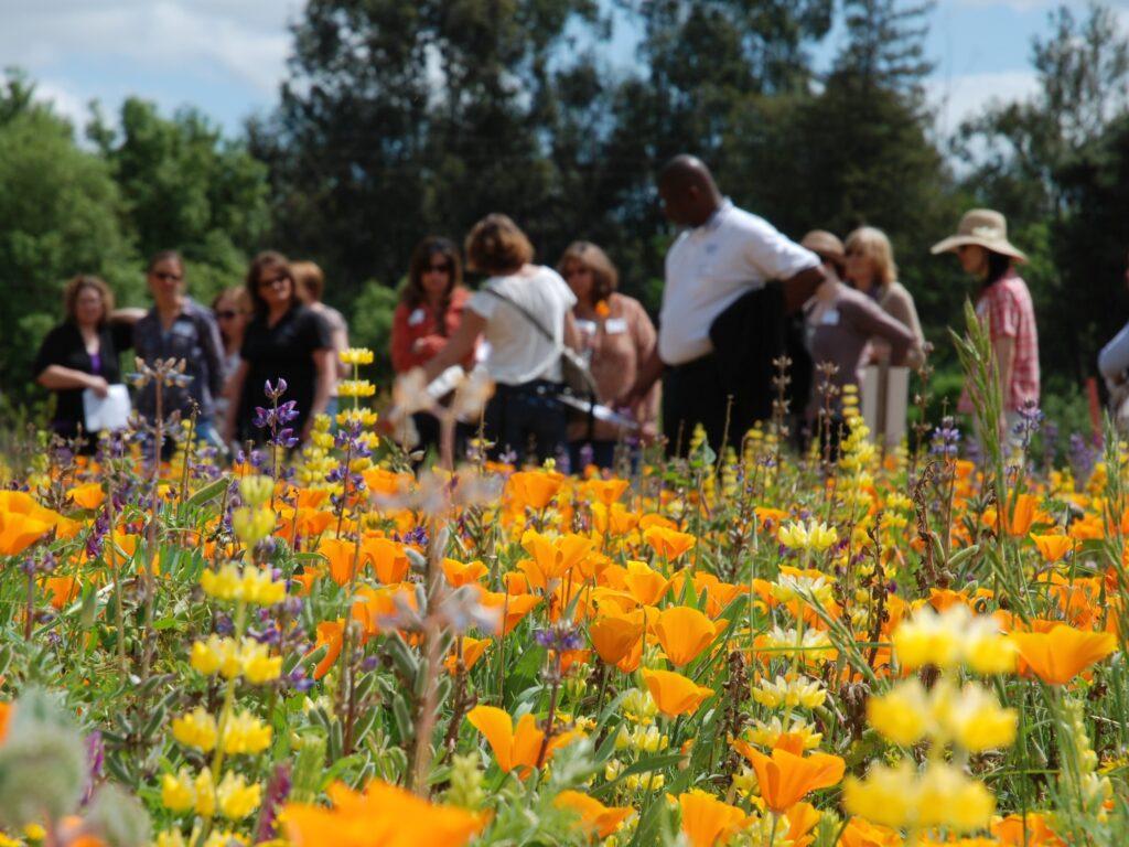 Group of people look at wildflowers.