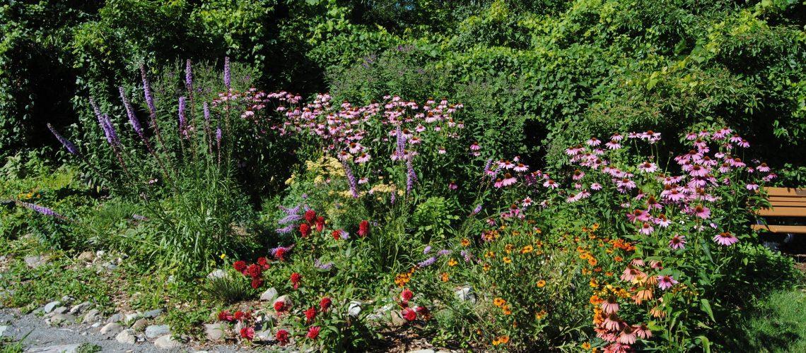 Photo-2-Pollinator-Garden-2